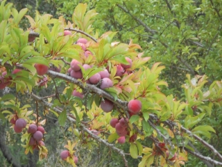 orchard-nourishment-party-45