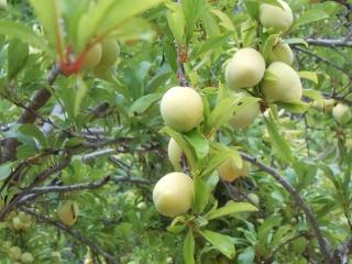 orchard-nourishment-party-46