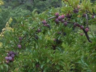 orchard-nourishment-party-50