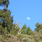the moon in Soquel