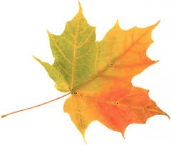 colored-leaf