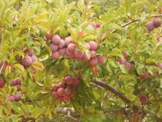 orchard-nourishment-party-43