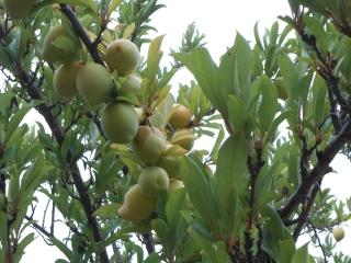 orchard-nourishment-party-47