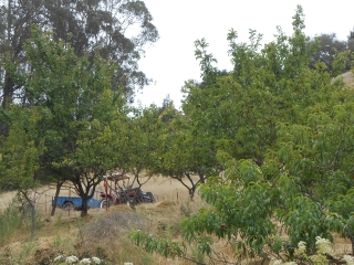 orchard-nourishment-party-55