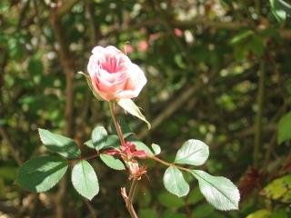 08-Sushila-ashram-garden