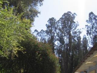 09-Sushila-ashram-garden