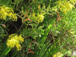 13-Sushila-ashram-garden