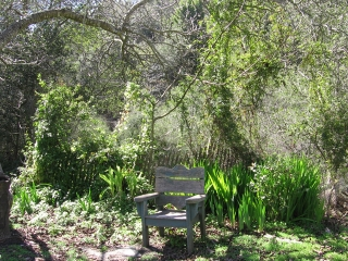 18-Sushila-ashram-garden