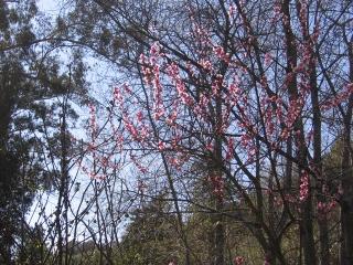 23-Sushila-ashram-garden